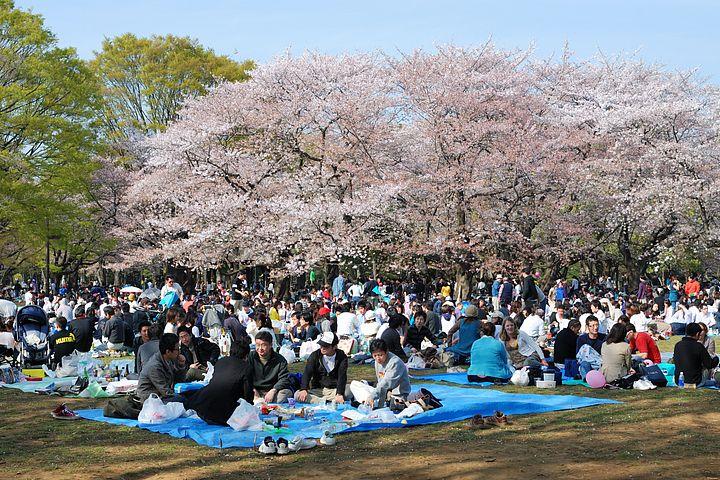 persone nel parco di Yoyogi fanno un picnic